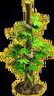 Grapes plant ph1