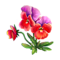 Coll flowers pansy