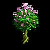 Res flowering shrub 1