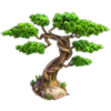 Res bonsai 2