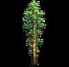 Resource-Pine 2