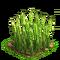 Wheat plant ph3