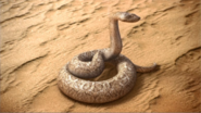 DirtyHarry - Snake