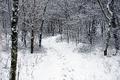 Winter-trail-snow-forest - West Virginia - ForestWander.png