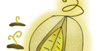 Meloney