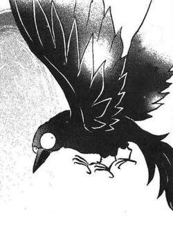 Yata Crow
