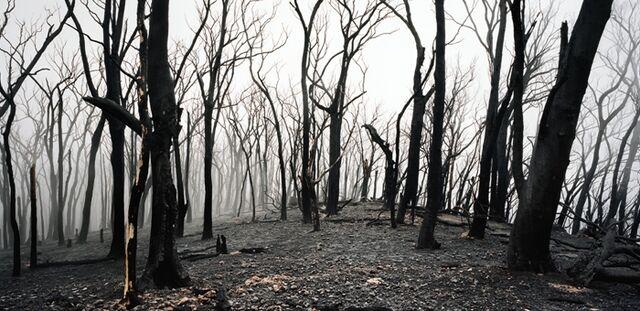 File:BurntForest Banner.jpg