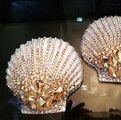 Perry Meek - Custom seashells