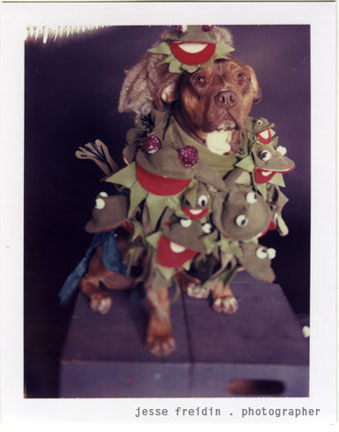 File:The Doggie Gaga Project.jpg