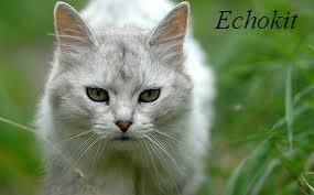 Echokit
