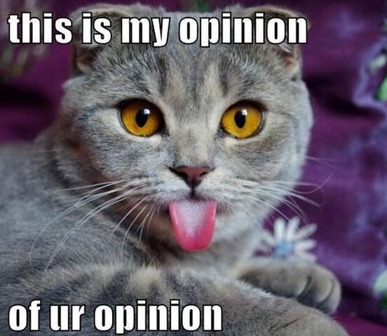 File:Funny-Cat-opinion.jpg