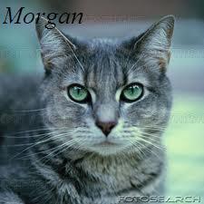 File:Morgan.jpeg