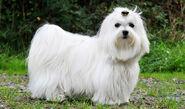 Olivia's dog