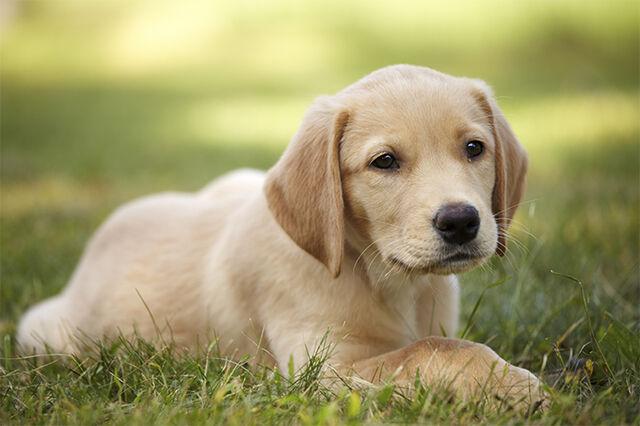 File:Josie's dog.jpg