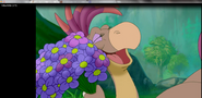 Doofah has flowers
