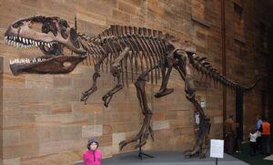 Giganotosaurus AustMus email