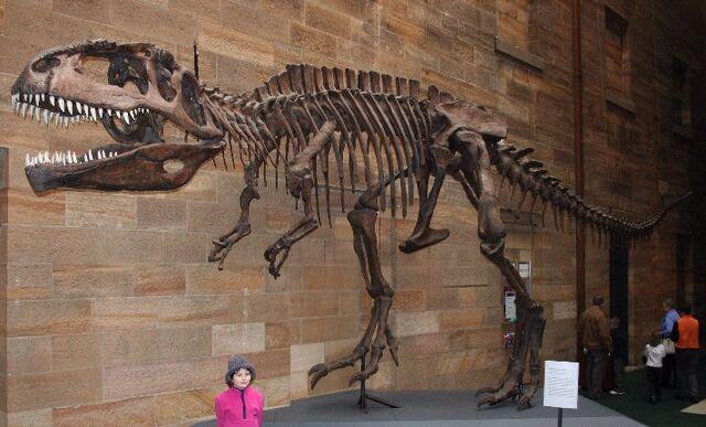 File:Giganotosaurus AustMus email.jpg