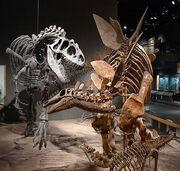 DMSN dinosaurs