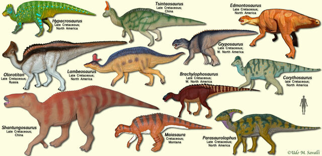 File:HadrosaurModels.jpg