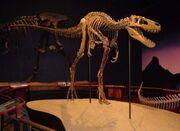 Tyrannosaurus Jane