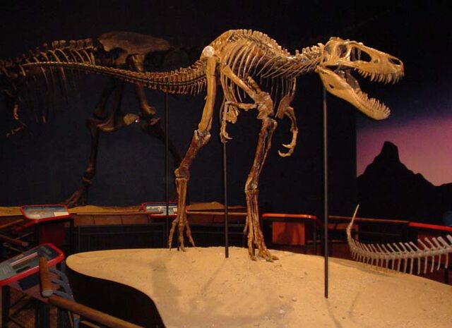 File:Tyrannosaurus Jane.jpg