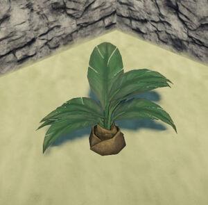Jungle-palmetto-flat