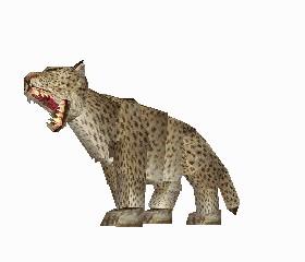 File:Leopard 3.jpg
