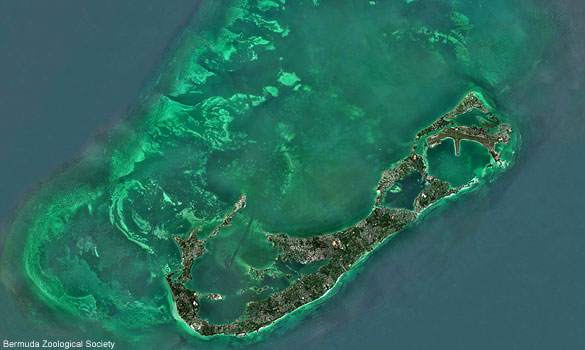 File:Bermuda.jpg