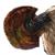 VultureFamilyIco