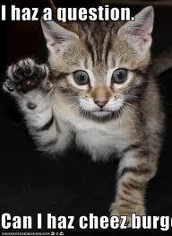 File:Cat5.jpg