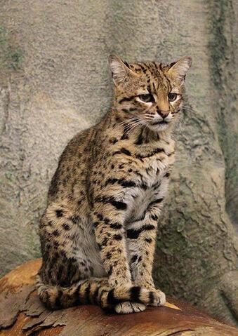 File:Geoffreys Cat.jpg