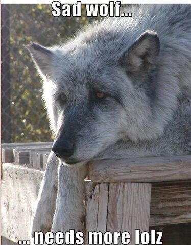 File:Lady Howl Need more loz wolf.jpg