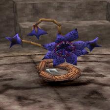 Trap Plant