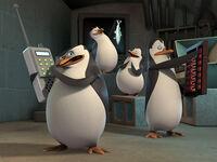 Nick penguins500