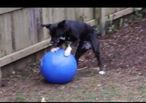 Moki with ball