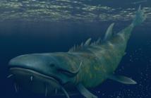 MoS45Fangfish