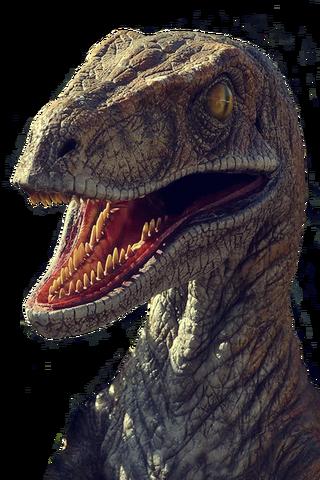 File:Raptor.png..png