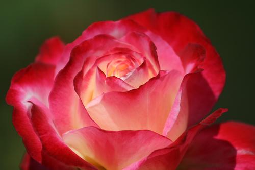 File:Mission Flower.jpg