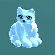 White cat NT