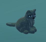 Black cat NT