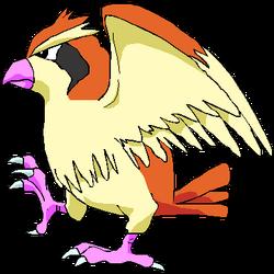 016 Pidgey OS3