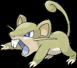 019 Rattata Shiny