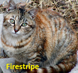 File:Firestripe.png