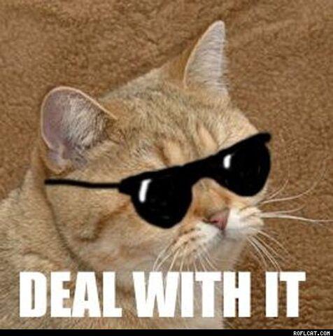 File:Dealwithit-cat-1.jpg