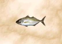 File:Mackerel 2.png