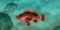 Sting Fish
