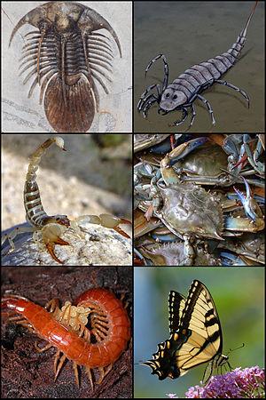 File:300px-Arthropoda.jpg