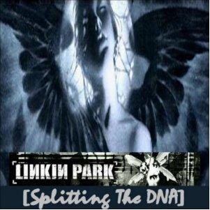 Splitting The Dna