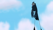 The-call-of-the-drongo-hd (439)