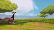 The-imaginary-okapi (235)